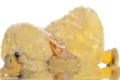 Plush animals. Small plush animals on a white background Stock Image