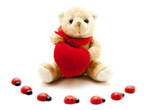 Plush bear with heart and ladybug Stock Image