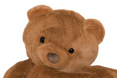 Plush bear isolated in white background royalty free stock photos