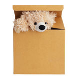 Plush bear peeking out of a cardboard box Royalty Free Stock Photography