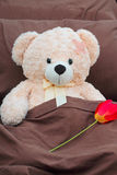 Plush bear sick patient with flower Royalty Free Stock Photo