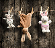 Plush bunnies on the clothesline. Wooden background Stock Photography