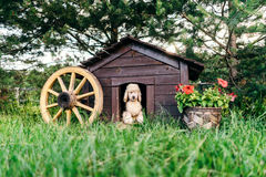 Plush dog in this doghouse. Funny photo. Plush dog in this dog doghouse. Surrounded by a beautiful lawn and pots with flowers Stock Photography