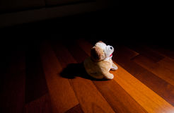 Plush dog doll toy sitting obediently in front of spotlight. Under scrutiny and in the spotlight Stock Photos
