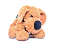 Plush dog Stock Photos