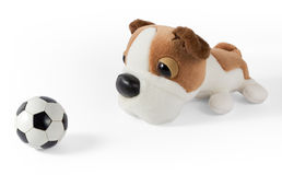 Plush Dog and Soccer Ball Royalty Free Stock Photography