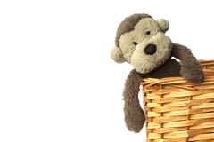 A plush, fluffy soft toy monkey sitting in a basket with a white background Stock Photography