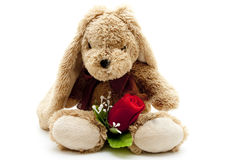 Plush hare with red rose Royalty Free Stock Photography