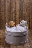 Plush Teddy bears Stock Photo