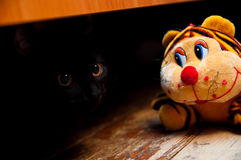 Plush tiger next to a black cat. Stock Images