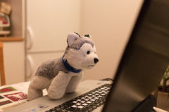Plush toy a dog attentively looks in the laptop Royalty Free Stock Image