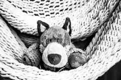 Plush Toy Stock Images
