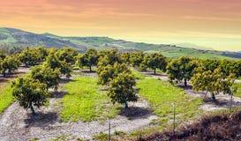 Orange de Malaga Photo libre de droits