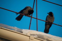 Plusieurs corneilles noires se reposant sur le toit de la maison contre le ciel bleu photos libres de droits
