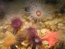 Plusieurs couleurs d'eau et étoiles de mer rouges Photos libres de droits
