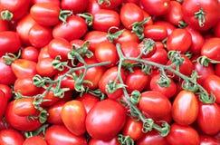 Plusieurs de tomates rouges mûres juteuses Images libres de droits