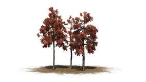 Plusieurs différents arbres de gomme noire pendant l'automne sur un secteur de sable illustration libre de droits
