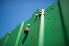 Plusieurs escargots de différentes tailles sur une barrière vert clair sous les cieux bleus Photos libres de droits
