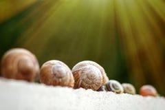 Plusieurs escargots rampent le long de la barrière dans le jardin Images libres de droits