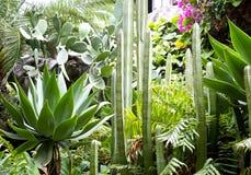Plusieurs espèces de cactus Image stock