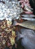 Plusieurs espèces des poissons et des reptiles de mer Photos libres de droits