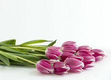 Plusieurs fleurs de tulipes horizontales sur le fond Images stock