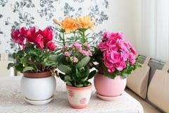 Plusieurs fleurs mises en pot sont sur la table dans la chambre Photographie stock