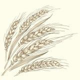 Plusieurs oreilles mûres de blé Image stock