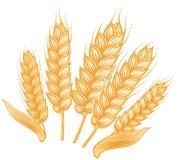 Plusieurs oreilles mûres de blé Photographie stock
