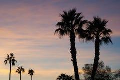 Plusieurs palmiers dans le coucher du soleil Photographie stock libre de droits