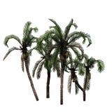 Plusieurs palmiers de date illustration libre de droits
