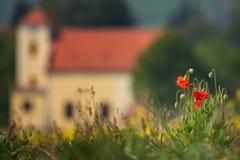 Plusieurs pavots rouges sur l'herbe verte, tir un jour ensoleillé, avec une profondeur de foyer, contre le contexte d'un medieva  Image stock