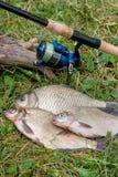Plusieurs poissons communs de brème, poissons crucian, poissons de gardon, poissons mornes Photographie stock libre de droits