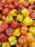 Plusieurs poivrons de piments brillants chauds colorés Photos stock