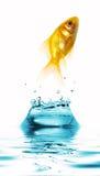 plusk wody Obrazy Royalty Free