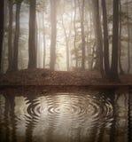 Pluskocze na jeziorze w lesie z mgłą fotografia stock