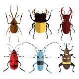 Pluskw ikony Insekta set Zdjęcia Royalty Free