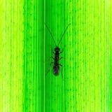Pluskwa chodzi w górę trzonu roślina na, Makro- fotografia insekta pluskwa zdjęcia stock