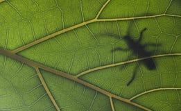 pluskwa duży liść Zdjęcie Stock