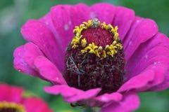 Pluskwa i kwiat Obrazy Stock
