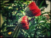 Pluskwa & kwiat Fotografia Stock