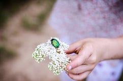 Pluskwa w kwiacie obraz stock