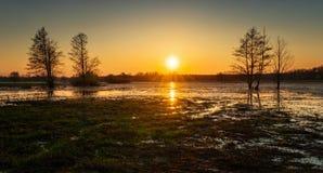 Pluskwa wylew panorama fotografia stock