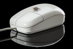 Pluskwy i komputeru mysz na odbijającym talerzu Obrazy Royalty Free