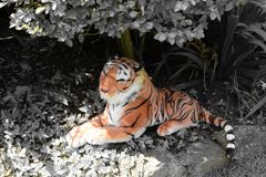 Pluszowa tygrysia krótkopędu ogródu scena obrazy royalty free
