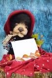 Pluszowy miś pisać tekscie w ciepłym Burgundy kapeluszu wśród jesień liści na błękitnym drewnianym tle z prześcieradłem Zdjęcia Stock