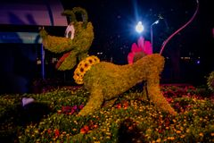 Pluto topiary at Epcot in Walt Disney World Resort 21. Orlando, Florida. June 03, 2019. Pluto topiary at Epcot in Walt Disney World Resort 21 royalty free stock images