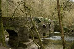 Plymbridge rezerwat przyrody Zdjęcia Royalty Free