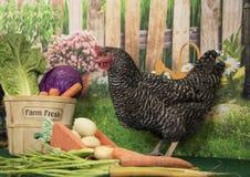 Plymouth Rock bommade för hönahöna med korgen av nya grönsaker för lantgården och vårblommor i blom fotografering för bildbyråer