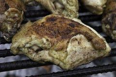 Plymouth Rock höna som lagar mat över en brand Arkivbilder